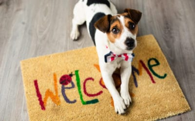 Pets and Housing: Resources for Owners and Landlords