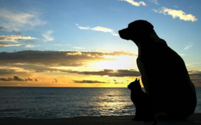 Coping with Pet Loss