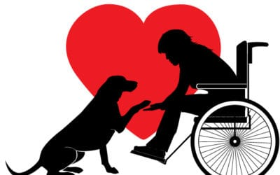 About Service Animals