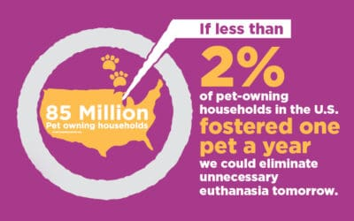 MHS Partners with the Petco Foundation to Celebrate National Foster a Pet Month in June