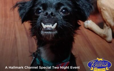MHS Alumni 'Boogie' in the 2020 American Rescue Dog Show
