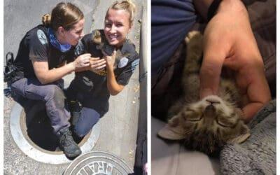 Humane Enforcement Officer Boam Rescues a Kitten…. twice!