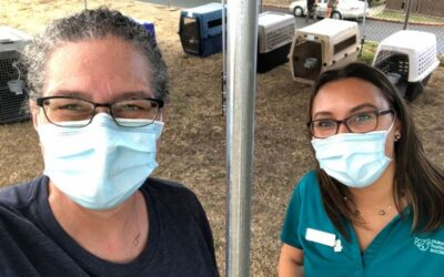Maui Humane Society Supports Temporary Covid-19 Relief Shelters
