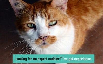 Sponsored Cat Adoptions