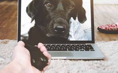 Get Your Paws Online!