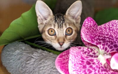 $20 Kitten Adoptions