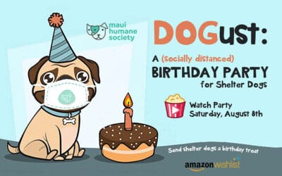 DOGust: A (Socially Distant) Birthday Party for Shelter Dogs
