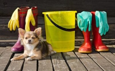 Using Cleaning Supplies Safely Around Pets