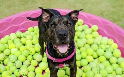Bob Bobs for Balls: A FUNraiser for Maui Humane Society