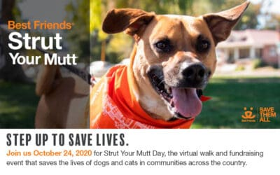 October 24th: Strut Your Mutt!