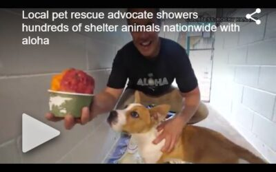 KHON2: Local pet rescue advocate sets sail on finding forever homes for shelter animals