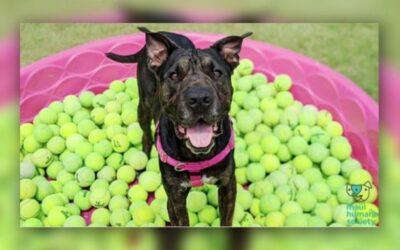 KHON2: MHS to hold virtual event featuring a dog looking for his forever home