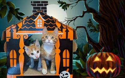 Oct. 11-17: Haunted Cat Mansion Contest