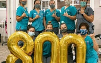 MHS Veterinary Team Celebrates Record-Breaking Comeback in Wake of Pandemic Disruption