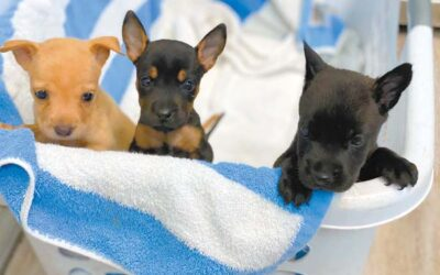 Maui News: Two puppies die after being left in container