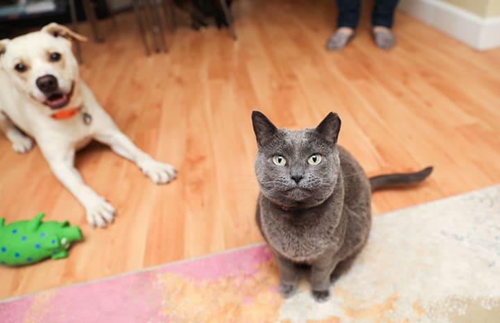 cat dog introduction