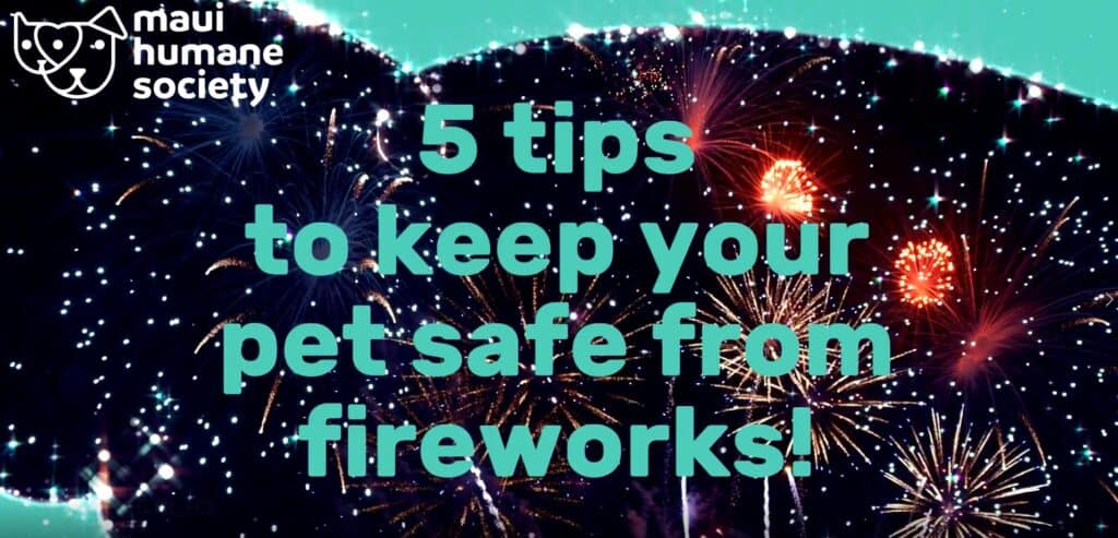 5 tips to keep your pet safe from fireworks