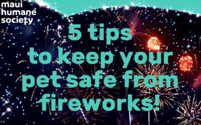 Keep Your Pet Safe from Fireworks