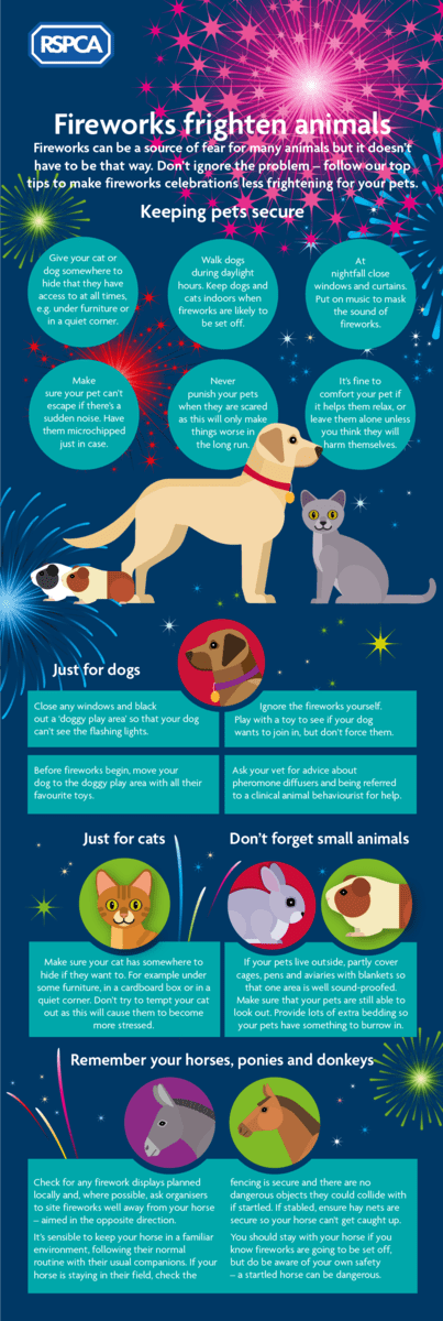 Fireworks Infographic for Animals and Pets