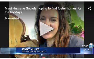 KHON2: Maui Humane Society hoping to find foster homes for the holidays