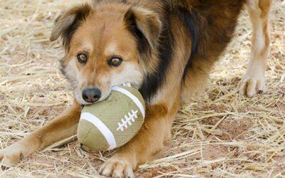 Sherry Woodard: Dog Body Language