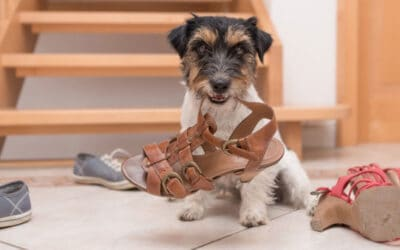 Sherry Woodard: Dog Chewing and How to Redirect It