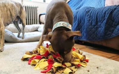 Dog Enrichment: Enrichment Rainbow