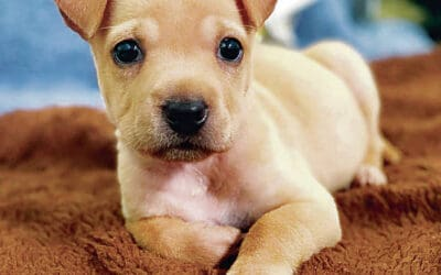 Honolulu Star Advertiser: More Pets Left Behind During Pandemic