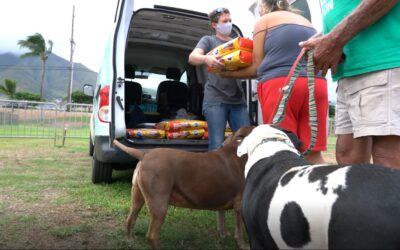 Maui Humane Society Receives ASPCA Relief & Recovery Grant