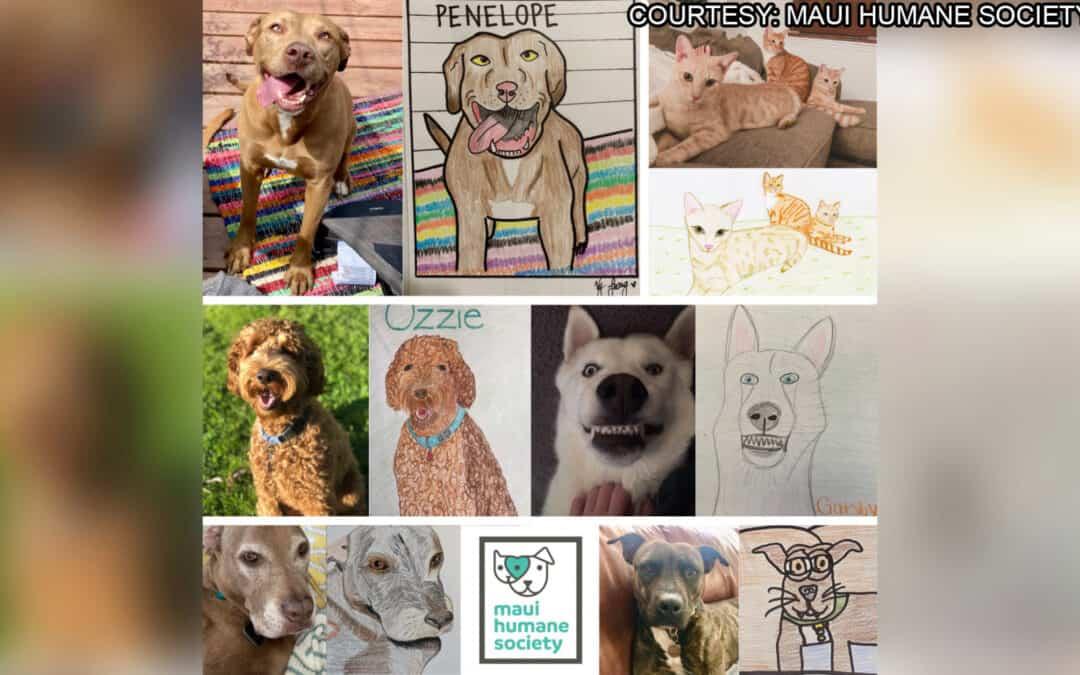 KHON2: Maui Humane Society to host 'Bad Pet Art Fundraiser'