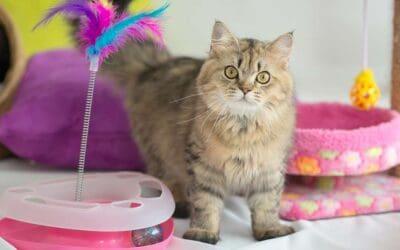 Cat Enrichment: Enrichment Rainbow