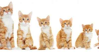 Best Friends: What to do if you find kittens