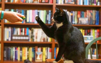 Jackson Galaxy: Teach Your Cat to High-Five (and more!)