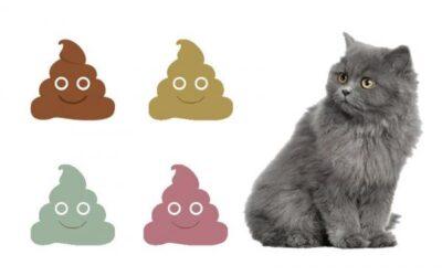 What is Your Kitten's Poop Consistency?