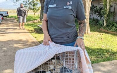 Maui News: Illegal trapping, transporting of pet cats a widespread problem