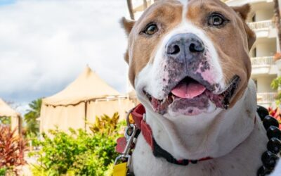 Travel and Leisure: These Hawaiian Shelter Dogs Are Getting a Night at Maui's Best Resorts — Here's How You Can Win a Stay With Them