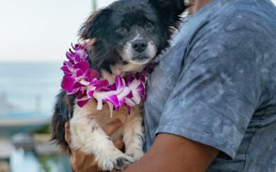 New York Post: Hawaiian Resorts Are Hosting Shelter Dogs That Guests Can Win a Stay With