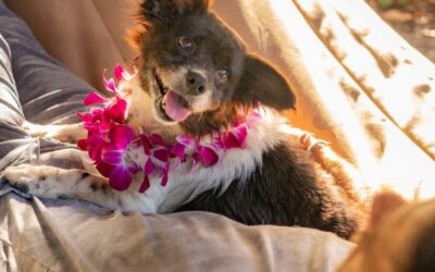 Fox News: Hawaiian Resorts Are Hosting Shelter Dogs That Guests Can Win a Stay With: 'Wags to Riches'