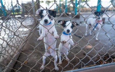 KITV4: Maui Humane Society in Need of Foster Homes as Shelter Population Experiences a Surge