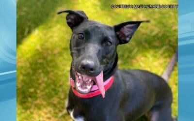 KHON2: Maui Humane Society Is Hosting a One-Day Adoption Event