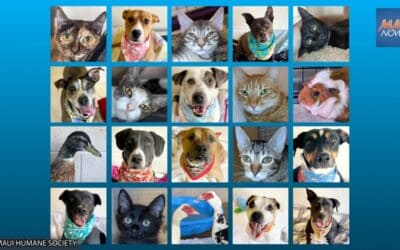 Maui Now: Maui Humane Society Hosts First Public Adoption Event in 18+ Months on Sept. 18